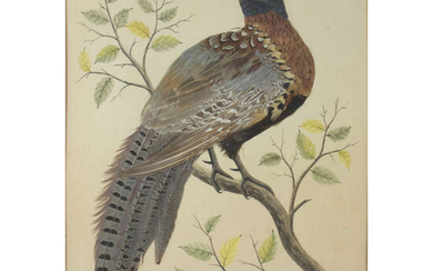 Early 20th century watercolour and applied feather painting depicting a pheasant.