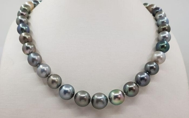 8.5x12mm Multi Coloured Tahitian Pearls - 14 kt. White