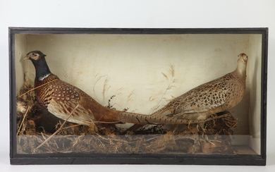 PAIR CASED TAXIDERMY PHEASANTS AMIDST NATURAL DRIED FOLIAGE, late 19th-early...