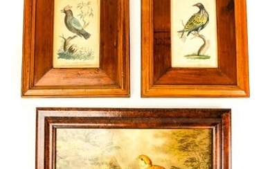 Antique 19th C Hand Colored Bird Engravings