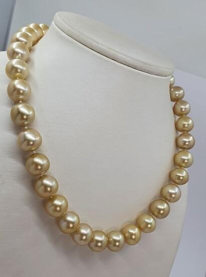 NO RESERVE - Large 12x13mm Golden South Sea Pearls - 14 kt. Gold - Necklace
