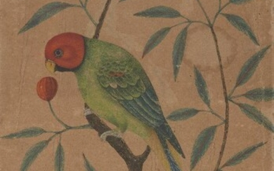 Property from an Important Private Collection A drawing of a parrot, 20th century, opaque pigments and watercolour on cardboard, 35.8 by 22.5cm. Note: With a later inscription signed Shaffih 'Abbas and dated 1021 AH/1612 AD.