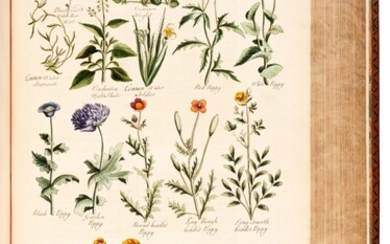 John Hill | The British Herbal, 1756, John Hill | The British Herbal, 1756