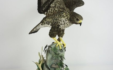 """Border Fine Arts Figure, """"The Buzzard"""" by R J Roberts, on an oak plinth, number 39 of a limited"""