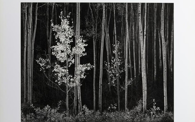 Ansel Adams, Northern New Mexico, Poster on foamcore