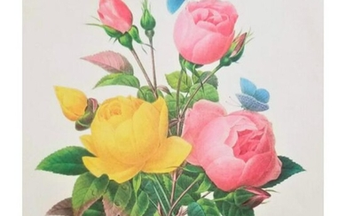 After Pierre-Jospeh Redoute, Floral Print, #127 Rose