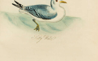Birds.- Mudie (Robert) The Feathered Tribes of the British Islands, third edition, 2 vol., 1841.