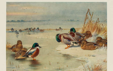 Birds.- Thorburn (Archibald) Game Birds and Wild-Fowl of Great Britain and Ireland, first edition, 1923.