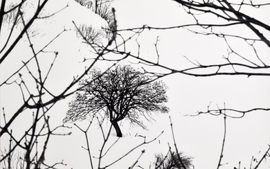 ABBAS GHARIB (1942, ), Lonely tree (Snow white photo collection), 2012