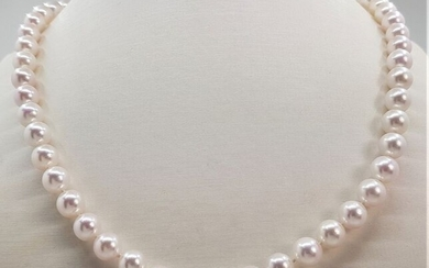 NO RESERVE PRICE - 7.5x8mm Akoya Pearls - 14 kt. White gold - Necklace