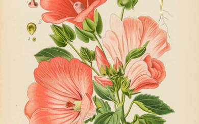 Gardening.- Step (Edward) and William Watson. Favourite Flowers of Garden and Greenhouse, 4 vol., [1896-7]; and 9 others, gardening (13)