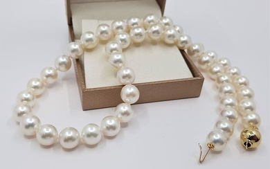 United Pearl - Top grade 8x9mm Akoya Pearls - 14 kt. Yellow gold - Necklace