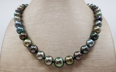 no reserve - 10x13mm Bright Round Multi Tahitian Pearls Yellow gold - Necklace