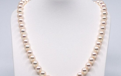 8-8,5 mm Akoya pearls, Silver - Necklace Pearls