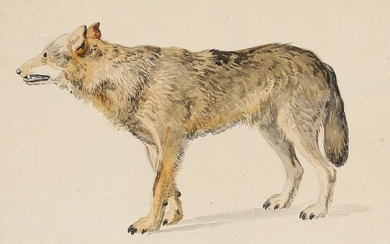 """Constantin Hansen: A wolf. Presumably a studie for """"Ægirs Gæstebud"""". c. 1855. Unsigned. Pencil and watercolour on paper. Sheet size 21.5 x 27 cm. – Bruun Rasmussen Auctioneers of Fine Art"""