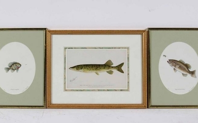 Three Colored Lithographs of Fish