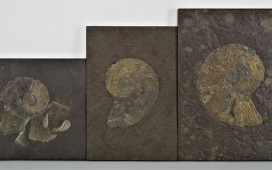 Mixed lot of slates with fossils (ammonites), 3 pieces